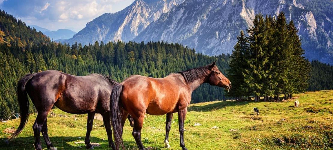Jízda na koni Bad Gastein