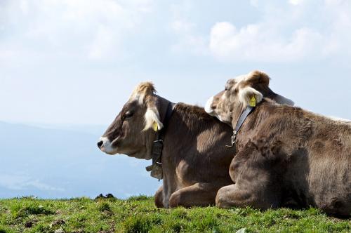 Alpské sýry